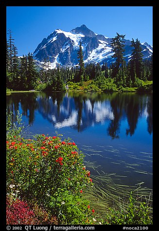 Mount Shuksan and Picture lake, mid-day, North Cascades National Park. Washington, USA.