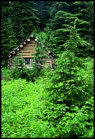 Log cabin, Mt. Baker/Snoqualmie National forest. Washington (color)