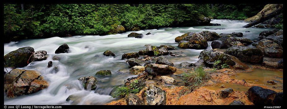Stream in forest with colored mud, Mt. Baker/Snoqualmie National forest. Washington (color)