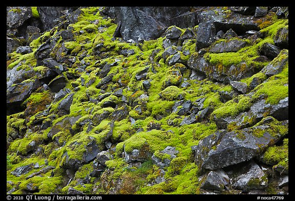 Mossy rocks, North Fork of the Cascade River, North Cascades National Park.  (color)