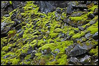 Mossy rocks, North Fork of the Cascade River, North Cascades National Park.  ( color)