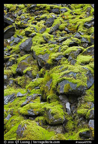 Boulders covered with green moss, North Cascades National Park.  (color)