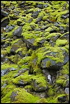 Boulders covered with green moss, North Cascades National Park. Washington, USA.