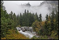 Stream, trees, and fog, North Cascades National Park. Washington, USA.