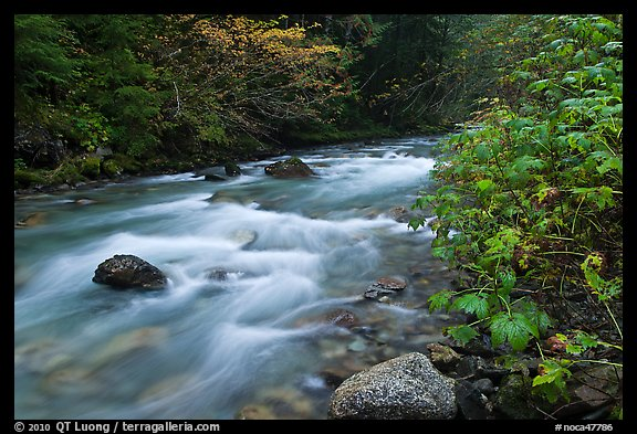 North Fork of the Cascade River in autumn, North Cascades National Park.  (color)