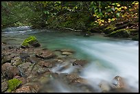 Smooth flow of North Fork of the Cascade River in the fall, North Cascades National Park. Washington, USA. (color)
