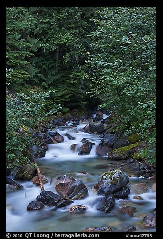 Creek cascading over boulders, Mount Baker Snoqualmie National Forest. Washington (color)