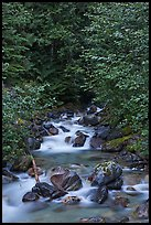 Creek cascading over boulders, Mount Baker Snoqualmie National Forest. Washington