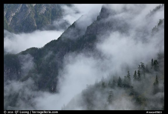 Ridges, trees, and fog, North Cascades National Park. Washington, USA.