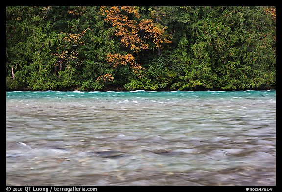 Skagit River during the fall salmon run, North Cascades National Park Service Complex.  (color)