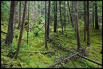 Rainforest with moss-covered floor and fallen trees, North Cascades National Park Service Complex. Washington, USA.