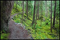 Trail in rainforest, North Cascades National Park Service Complex. Washington, USA. (color)