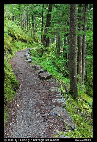 River Loop trail, North Cascades National Park Service Complex. Washington, USA.