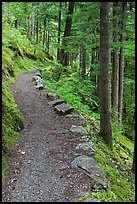 River Loop trail, North Cascades National Park Service Complex. Washington, USA. (color)