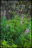 Fireweed and cliff,  North Cascades National Park Service Complex.  ( color)