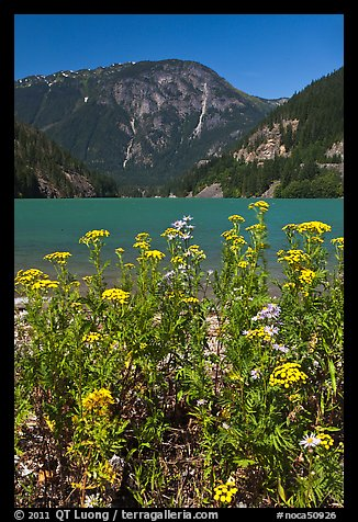 Summer wildflowers and Diablo Lake,  North Cascades National Park Service Complex.  (color)