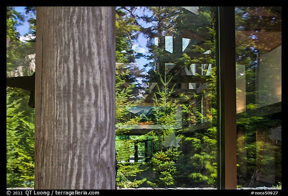 Forest, Visitor Center window reflexion, North Cascades National Park.  (color)