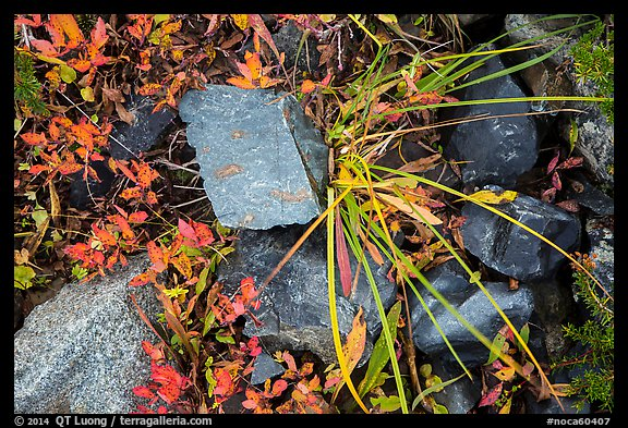 Close-up of blocks of rocks and berry plants, North Cascades National Park Service Complex.  (color)