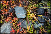 Close-up of blocks of rocks and berry plants, North Cascades National Park Service Complex.  ( color)