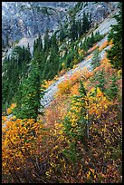 Steep slopes in autumn, North Cascades National Park Service Complex.  ( color)
