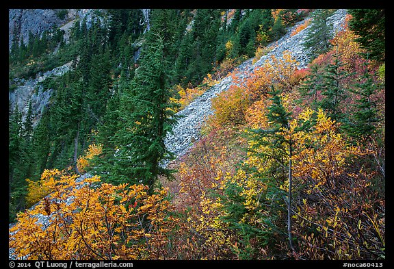 Slopes with shrubs in autumn foliage, scree, and spruce, North Cascades National Park Service Complex.  (color)