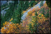 Slopes with shrubs in autumn foliage, scree, and spruce, North Cascades National Park Service Complex.  ( color)