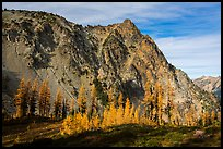 Alpine larch in autumn and rocky peak above Easy Pass, North Cascades National Park.  ( color)