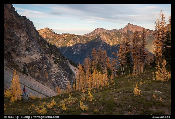 Alpine larch and mountains at sunset, Easy Pass, North Cascades National Park.  (color)