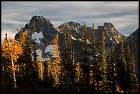 Fisher Peak trees at sunset, North Cascades National Park.  ( color)