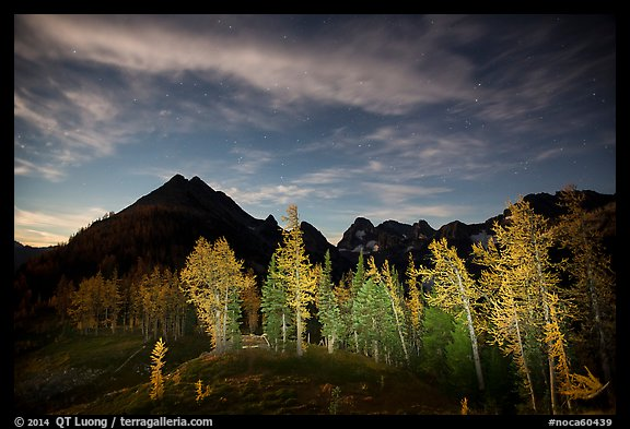 Larch trees and mountains from Easy Pass at night, North Cascades National Park.  (color)
