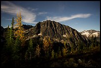 Larches and Mount Logan from Easy Pass at night, North Cascades National Park.  ( color)