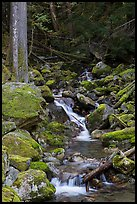 Creek with mossy boulders, North Cascades National Park Service Complex.  ( color)