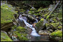 Creek flowing over mossy rocks, North Cascades National Park Service Complex.  ( color)