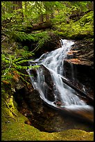 Creek cascading in forest, North Cascades National Park Service Complex.  ( color)