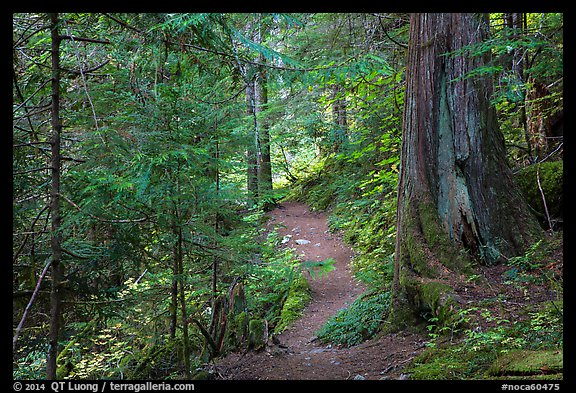 Thunder Creek trail, North Cascades National Park Service Complex.  (color)