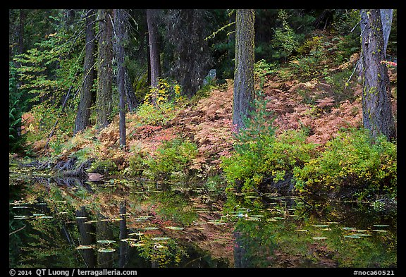 Shore reflection, Coon Lake, North Cascades National Park Service Complex.  (color)