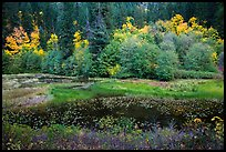Pond in autumn, North Cascades National Park Service Complex.  ( color)