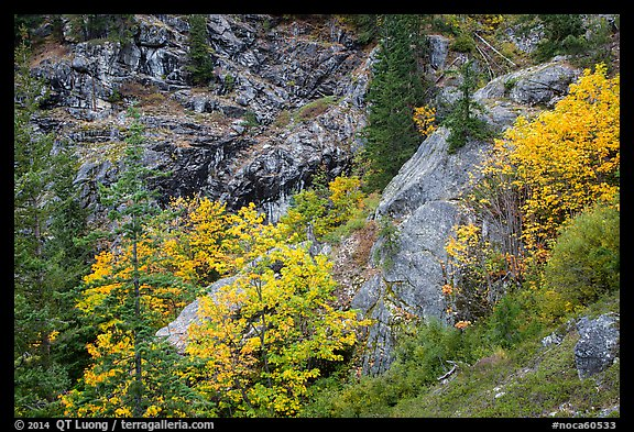 Trees and cliffs in autumn, North Cascades National Park Service Complex.  (color)