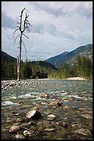 Isolated dead tree, Stehekin River, North Cascades National Park Service Complex.  ( color)