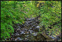 Stream, Stehekin, North Cascades National Park Service Complex.  ( color)