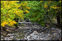 Trees in autum foliage bordering stream, Stehekin, North Cascades National Park Service Complex.  ( color)