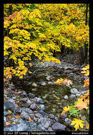 Stream and trees in autum foliage, Stehekin, North Cascades National Park Service Complex.  (color)