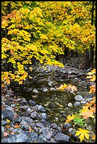 Stream and trees in autum foliage, Stehekin, North Cascades National Park Service Complex.  ( color)