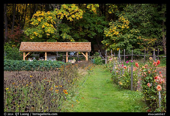 The garden, Stehekin, North Cascades National Park Service Complex.  (color)