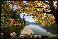 Deck framed by tree in autumn foliage, Lake Chelan, Stehekin, North Cascades National Park Service Complex.  ( color)