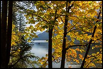 Trees in fall foliage on shore of Lake Chelan, Stehekin, North Cascades National Park Service Complex.  ( color)