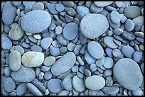 Round pebbles on beach. Olympic National Park, Washington, USA.
