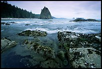 Tidepool at Rialto beach. Olympic National Park, Washington, USA. (color)