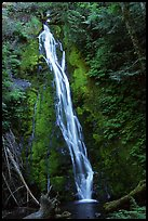 Mossy waterfall , Elwha valley. Olympic National Park, Washington, USA. (color)