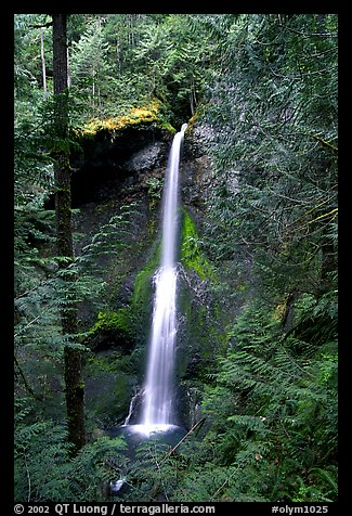 Marymere falls framed by trees. Olympic National Park (color)